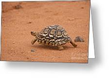 Leopard Tortoise Running Greeting Card