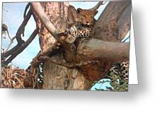 Leopard Up A Tree Greeting Card