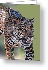 Jaguar Walking Portrait Greeting Card