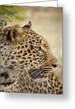 Leopard Zimbabwe Greeting Card