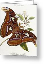 Lepidoptera Greeting Card by Edward Donovan