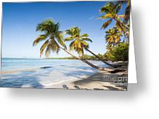 Les Salines Beach Greeting Card