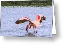 Lesser Flamingo Filter Feeding Lake Nakuru Kenya Greeting Card