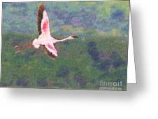 Lesser Flamingo Phoenicopterus Minor Flying Greeting Card