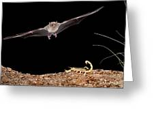 Lesser Long-nosed Bat Approaching Greeting Card