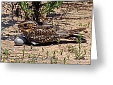 Lesser Nighthawk Chordeiles Acutipennis Greeting Card