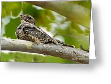 Lesser Nighthawk On Branch Greeting Card