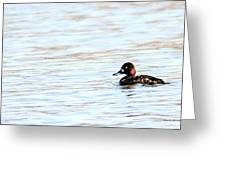 Lesser Scaup Greeting Card