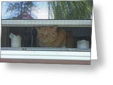 Let Me Out Cat Picture Greeting Card