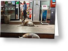 Let Sleeping Dogs Lie Where They May Greeting Card