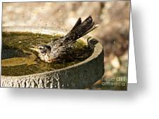 Let The Water Fly Greeting Card