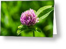 Let Us Live In Clover - Featured 3 Greeting Card
