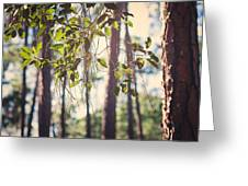 Let Your Light Shine Through Greeting Card