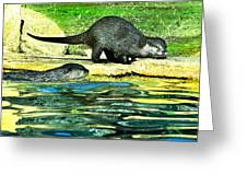 Lets Play And Swim Greeting Card