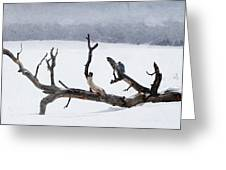 Letting Go  -  Lewis Woodpeckers Greeting Card