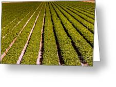 Lettuce Farming Greeting Card