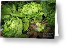 Lettuce Go Forward Greeting Card