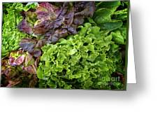 Lettuce Medley Greeting Card