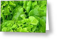 Lettuce Sing Greeting Card