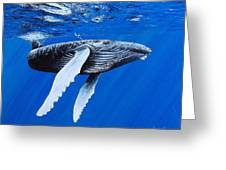Leviathan Greeting Card