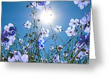 Lewis Blue Flax Backlit Greeting Card