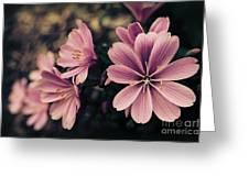 Lewisia Flowers - 7 Greeting Card