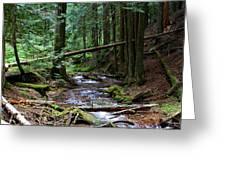 Liberty Creek 2014 #5 Greeting Card
