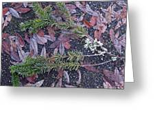 Lichen And Fir Branch Greeting Card