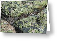 Lichen And Granite Img 6187 Greeting Card