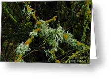 Lichen And Moss Greeting Card