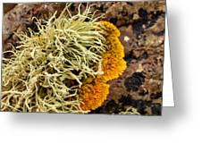 Lichen And Weed Greeting Card