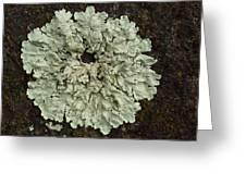 Lichen Circle Greeting Card