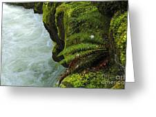 Lichen Covered Rocks With Stream In Oregon Greeting Card
