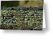 Lichen Macro I Greeting Card