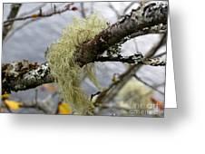 Lichen On Tree Greeting Card