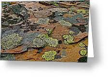 Lichens Along Trail To Plain Of Six Glaciers In Banff National Park-alberta-canada Greeting Card
