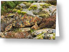 Lichens And Moss In Glen Strathfarrar Greeting Card