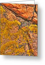 Lichens On The Shoreline Rocks 2 Greeting Card