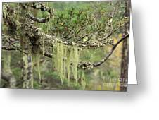 Lichens On Tree Branches In The Scottish Highlands Greeting Card