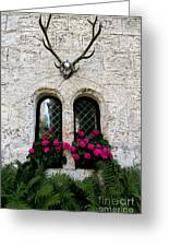 Lichtenstein Castle Windows Wall And Antlers - Germany Greeting Card