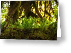 Licorice Fern Greeting Card