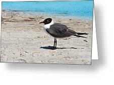 Lido Gull Greeting Card