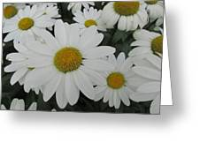 Life Blooming  Greeting Card
