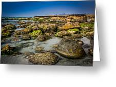 Life Clings As The Tides Ebb Greeting Card