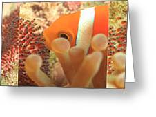 Life Cycle Of Anemone Fish Greeting Card