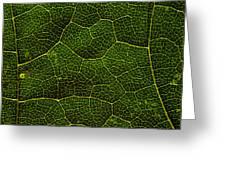 Life Grid In A Leaf Greeting Card