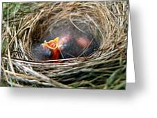 Life In The Nest Greeting Card