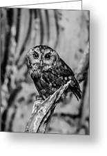 Life Is A Hoot Greeting Card by Jason Brow