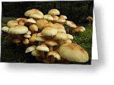 Life Of The Forest Floor Greeting Card