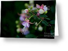 Life's Quiet Moments Greeting Card